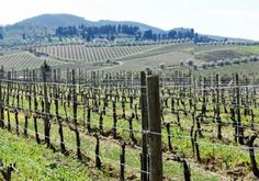 Shortcut Guide to the Chianti Wine Region of Italy