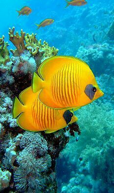 Pin By Wattanachai Wannaying On Animals And Pets Beautiful Sea Creatures Tropical Fish Marine Fish