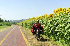 Quando e onde encontrar os campos de girassóis na Toscana | Viagem e Turismo