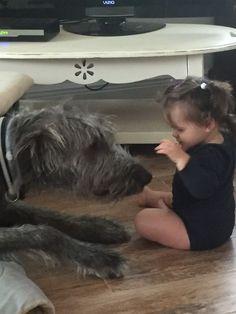 Huge Dogs, Giant Dogs, Scottish Deerhound, Irish Wolfhounds, Funny Animals, Cute Animals, Irish Terrier, Dog Rules, Irish Setter
