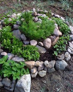 A popular gardening technique, often associated with Permaculture. Some London Permaculture Herb Spiral photos here Herb Spiral, Spiral Garden, Sacred Garden, Vegetable Garden, Garden Plants, Herb Gardening, Herb Plants, Medicinal Plants, Garden Beds