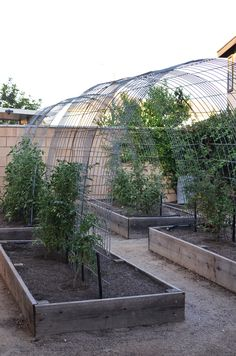 Substantial & Attractive Tomato Vine Arches created from  16′ x 3′ livestock fencing panels anchored by 3′ concrete stakes (4 per arch). {*} photo tutorial at mycakies blog