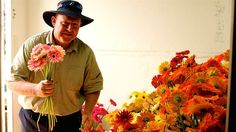 Andrew Borthwick and his family will be picking up to 6,000 gerberas for Valentine's Day this year. (Image: ABC/Jon Coghill)