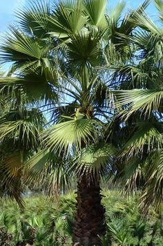Five drought resistant plants Terrace Garden, Garden Plants, Drought Resistant Plants, Buxus Sempervirens, Fan Palm, Indoor Outdoor Rugs, Botany, Garden Landscaping, Eco Friendly
