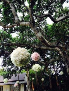 Tree floral decor for wedding in Kahala Oahu