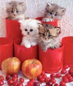 Appels cherries and 4 little kittens!