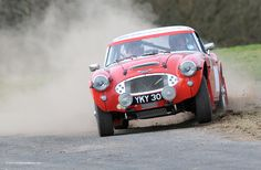 austin healey rally cars