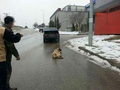 """""""O Grito do Bicho"""": Monstro cruel é pego arrastando seu cão na traseir..."""