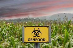 The Biggest GMO Myths, Busted http://www.rodalenews.com/gmo-myths?cm_mmc=Facebook-_-Rodale-_-Food-_-TheBiggestGMOMythsBusted