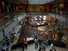 10 Best U.S. Museums for Kids (and Kids at Heart)............. Natural History Museum, Los Angeles, CA
