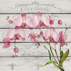 Pink Orchids-jp3925 Painting by Jean Plout