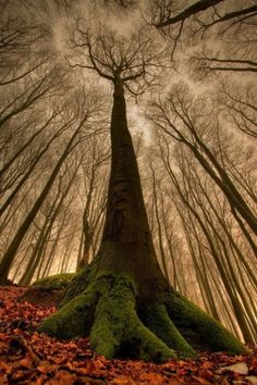 I went into the woods and I got lost in their most complex harmony. JSB #nature #woods #trees