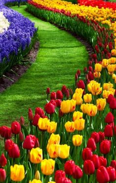 A formal display of spring bulbs. Beautiful Flowers Garden, Exotic Flowers, Amazing Flowers, Beautiful Roses, Pretty Flowers, Beautiful Nature Wallpaper, Beautiful Landscapes, Garden Art, Garden Design