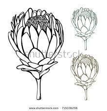 protea flower drawing에 대한 이미지 검색결과