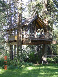 Durango tree house
