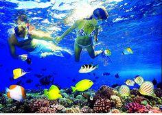 Maui Snorkel Tours,