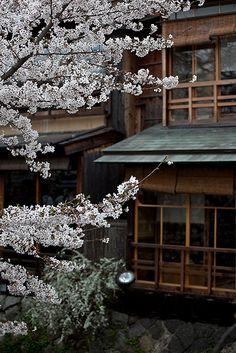 #sakura #japan #kyoto