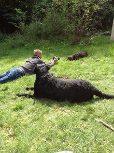Dennis Benji Bruno Dogs, Animals, Animales, Animaux, Pet Dogs, Doggies, Animal, Animais