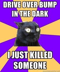 Anxiety Cat. Omg what was that. I just killed someone.