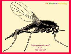 Now You See-um, Now You Don't! #noseeum #repellent #mosquito #bmrtg #natural #lemongrass http://thesolidbarcompany.com/blogs/rebeccas-blogs/67462211-now-you-see-um-now-you-dont