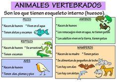Los animales se pueden clasificar en dos grandes grupos: los vertebrados e… Science Experiments Kids, Science For Kids, Life Science, Science And Nature, Teaching Spanish, Teaching English, Teachers Corner, English Literature, Animal Projects