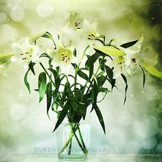 St Josephs Lilies photography printable for wall art https://www.etsy.com/uk/listing/575135792/st-joseph-lilies-white-flowers-modern?ref=shop_home_active_3 #wedding #weddingideas #stjosephlilies #lilies #lily #flowers #white #floral #design #urbanrusticnomad #wallart #printable #digital #download #gallery #bedroomdecor #bedroom #homedecor