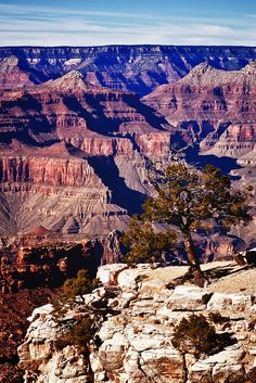 THERE IS NOT ONE MINUTE OF ONE DAY, OF ONE YEAR that I don't wish I were standing here looking at the Grand Canyon