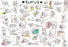 """""""Rufus"""" by Rachael Smith from Meowoodle"""