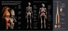National Geographic made history easy with its diagrams
