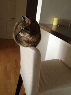 25 gatos que encontraram um lugar perfeito para relaxar