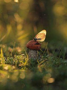 Naturbilder: schöne #Naturbilder #Natur #Pilz