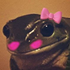 Matching Pfp, Matching Icons, Cute Profile Pictures, Cute Pictures, Memes Lindos, Emo Princess, Picture Icon, Cute Frogs, Frog And Toad