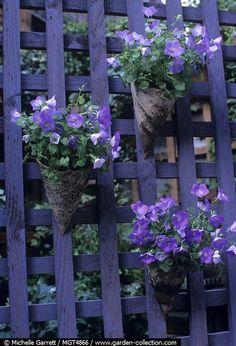 Campanula with pots made from bark