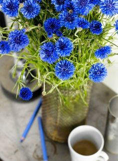 Cornflowers - Read more about the herbal skincare properties of cornflower at www.herbhedgerow.co.uk