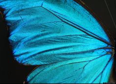 The growing knowledge of how a morpho butterfly or peacock displays vivid colors offers alternatives to chemical dyes and pigments, which often contain toxic heavy metals. The surface of the creatures' delicate wings or feather fibers plays with the wavelengths of incoming light, similar to how light goes through prism.