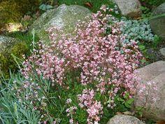 Havenyt.dk - Blomster til Skygge - porcelænsblomst Greenhouse Gardening, Shade Garden, Garden Fun, Garden Ideas, Amazing Gardens, Garden Inspiration, Grass, Planters, Backyard
