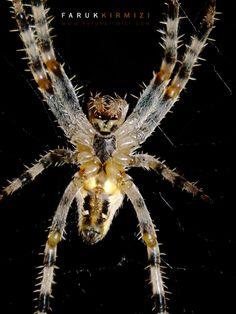 500px'te Faruk Kırmızı tarafından Spider fotoğrafı #spider #selfie