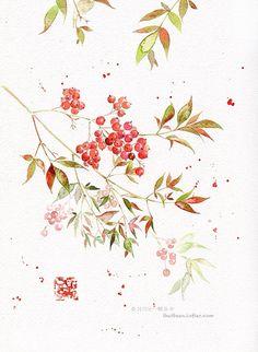 春日花白秋里红,串串红果挂叶丛-Jessie一颗豆子
