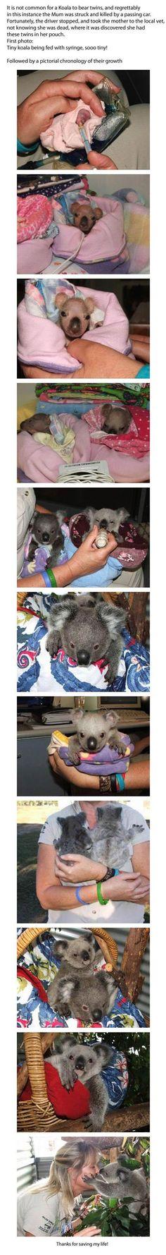 Pin trobat a http://www.lolme.org/lolpics/baby-koala-life-story/