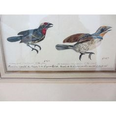19th Century French Bird Watercolor