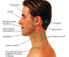 Lymph nodes of head & neck                                                                                                                                                                                 More