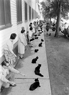 Casting call for a 'black cat'. Hollywood, circa 1960.