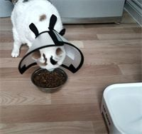 Not soo much a toy - but a solution to cats trying to eat when the vet prescribes those annoying collars.  Part of the collar removes for feeding time.  GREAT JOB!