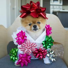 The perfect present. Tiny Puppies, Cute Little Puppies, Cute Puppies, Cute Dogs, Cute Babies, Cute Funny Animals, Funny Animal Pictures, Cute Baby Animals, Animals And Pets