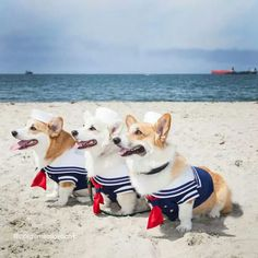 Nautical Corgis