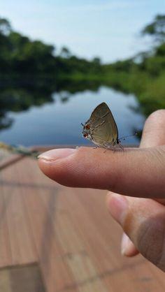 Foto tirada no Pantanal (samsung s5)