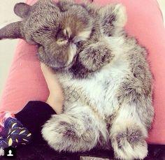 Bunnyyyyy