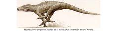 Iberosuchus, a land dwelling crocodilian from the Iberian Peninsula, 40 MY old.