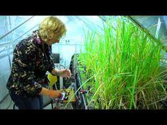 Planten maken stroom - onderzoek aan Wageningen University