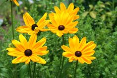 Annual Perennial and Biennial Plants - Make sure to visit GardenAnswers.com and download our free plant idenfication app.